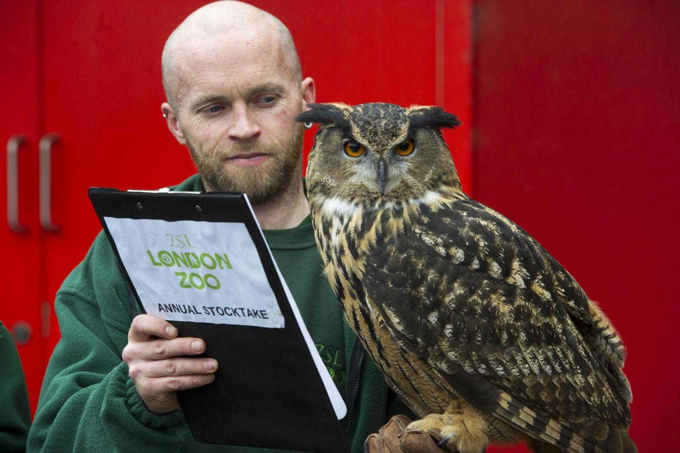 Annuale inventario allo Zoo di Londra08