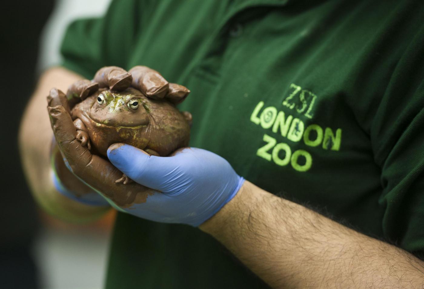 Annuale inventario allo Zoo di Londra05