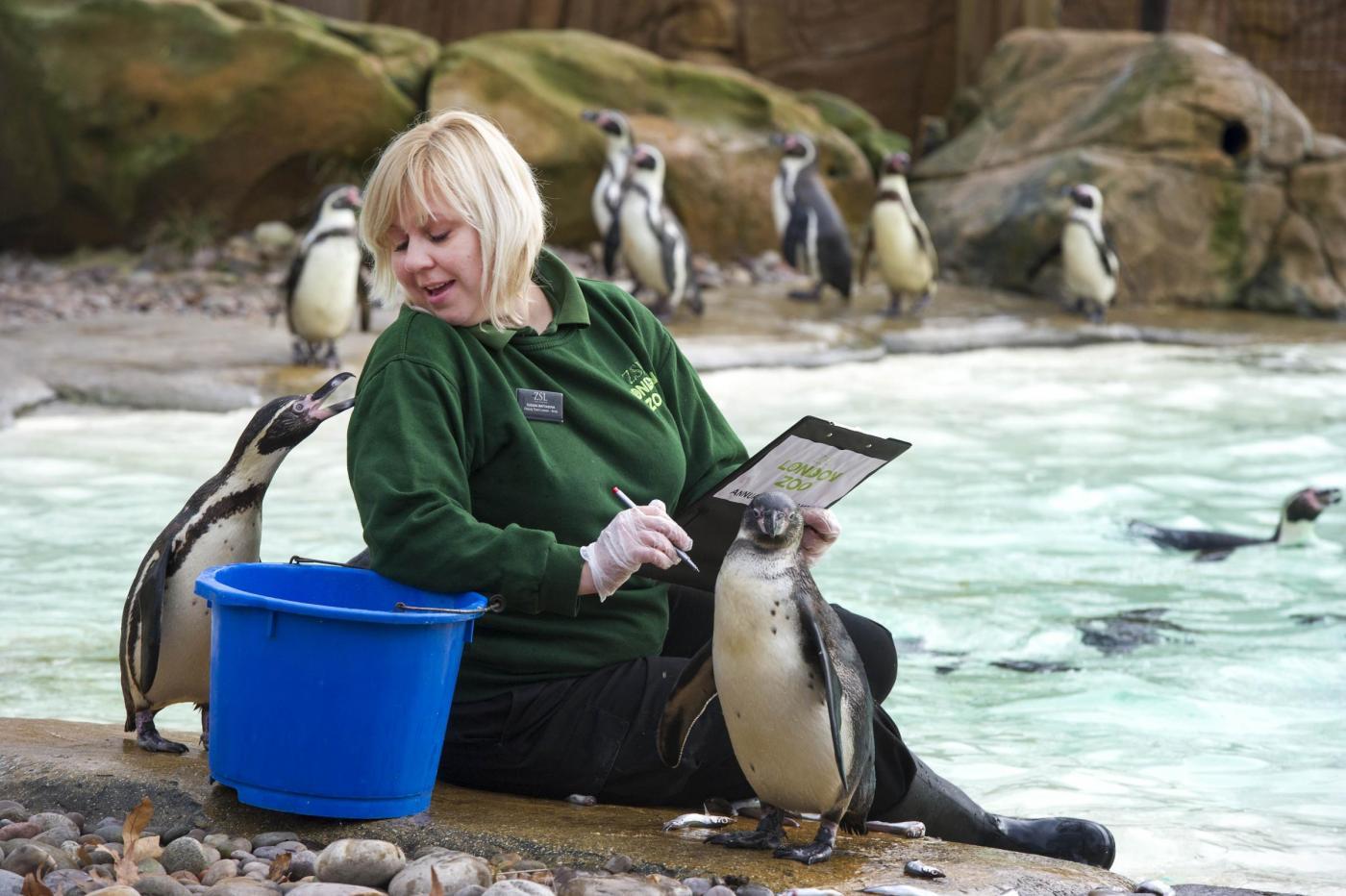 Annuale inventario allo Zoo di Londra04