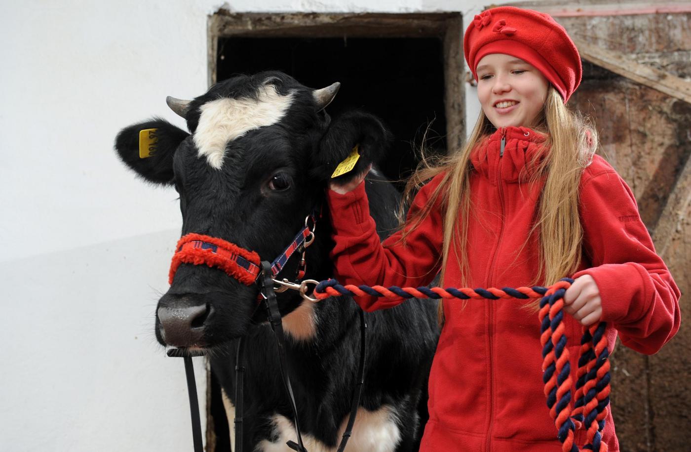 Germania, la ragazzina che a 12 anni cavalca la mucca09
