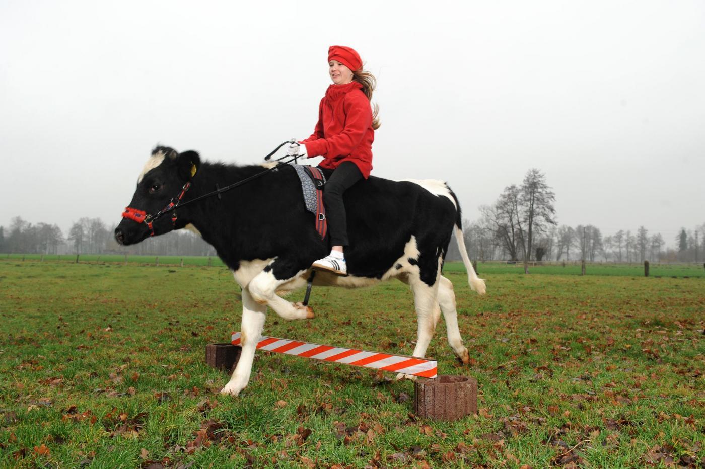 Germania la ragazzina che a 12 anni cavalca una mucca - Avere un cavallo ...