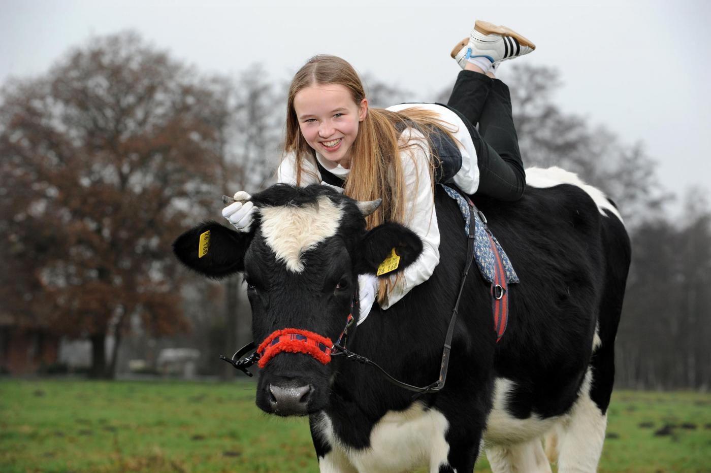 Germania, la ragazzina che a 12 anni cavalca la mucca04