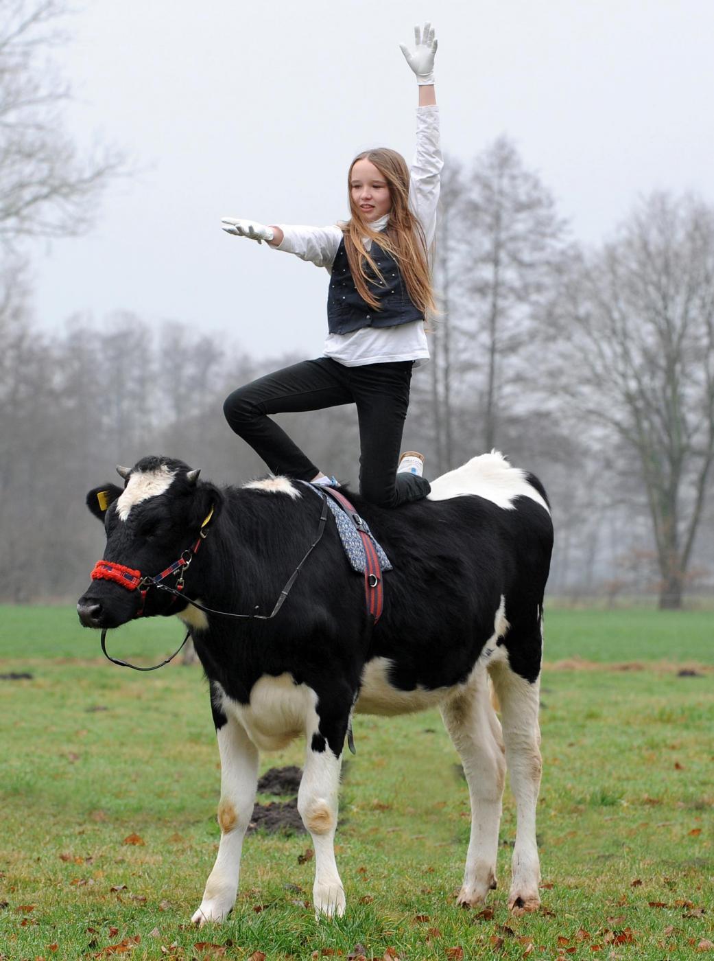 Germania, la ragazzina che a 12 anni cavalca la mucca01