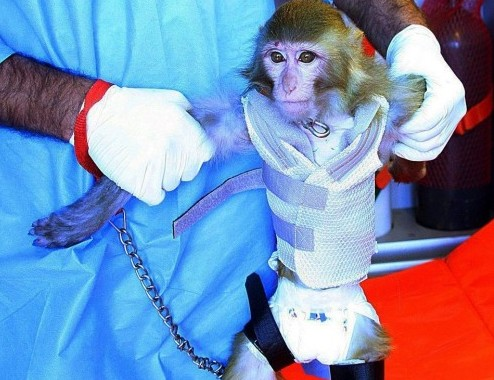 Iran says it successfully launched monkey into space03
