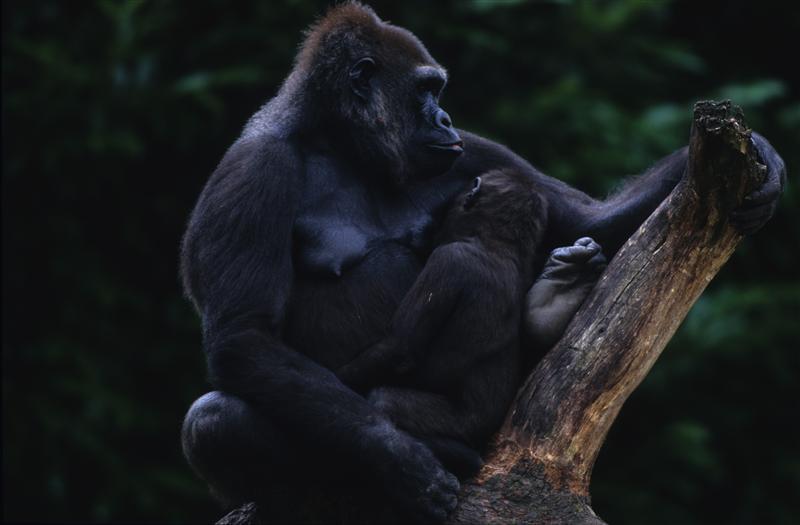 Greenpeace, le immagini più belle della biodiversità: oggi è la