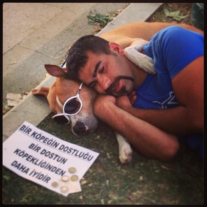 Turchia, il cane protagonista delle rivolte di Instanbul spopola su Twitter 02
