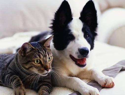 Vacanze con gli animali domestici, consigli pratici di Aidaa