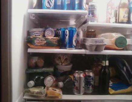 Conservazione frigorifero: consigli di Ministero della Salute