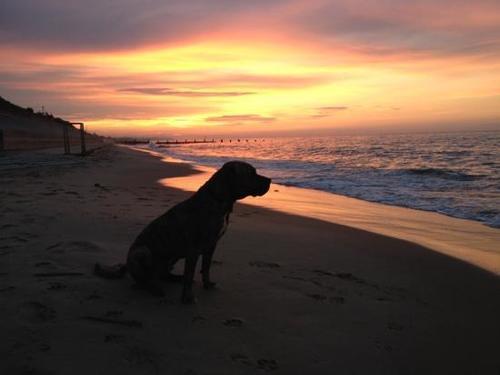 Sorrento, animali vietati in spiaggia: ordinanza crea polemiche