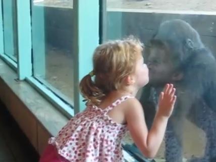 Girl_kisses_baby_gorilla