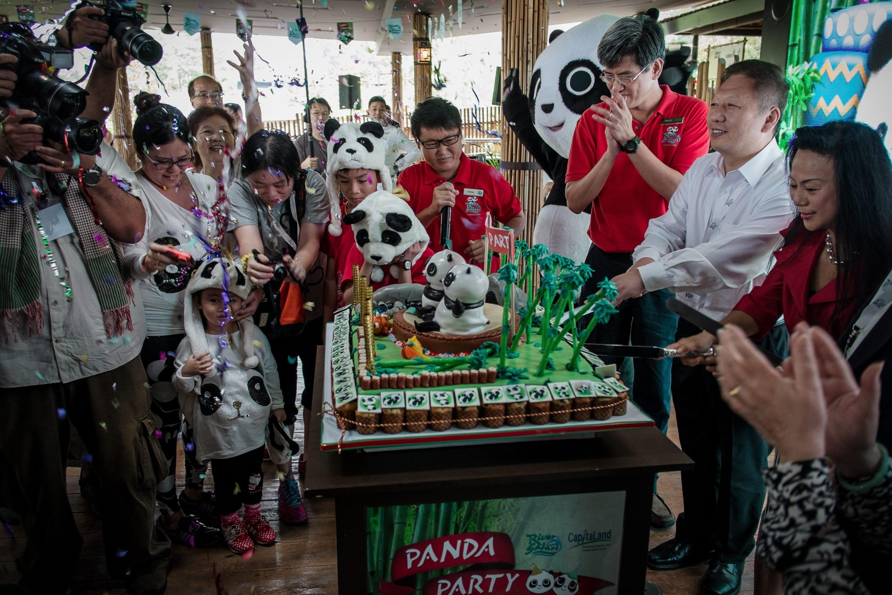I due panda compiono gli anni e festeggiano con la torta di bamboo05