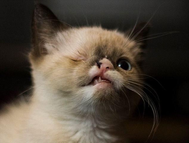 Usa, il gatto pirata con un solo occhio che commuove il web 04