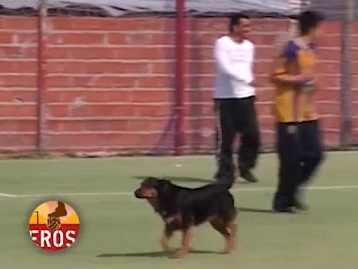 Cane segna un gol