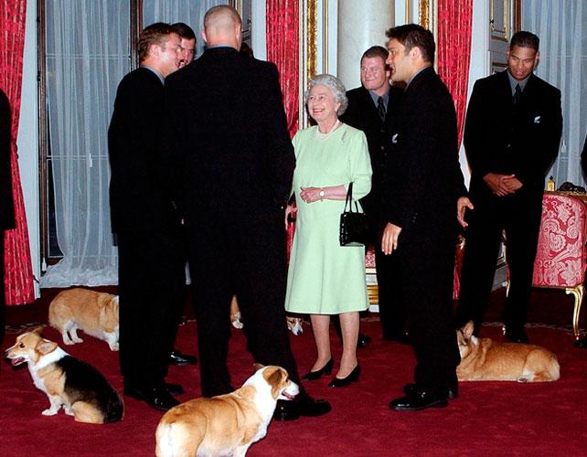 Filetto di manzo, chef e valletti: le follie della Regina per i suoi cani