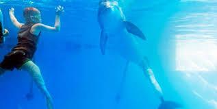 Usa, il bimbo di otto anni e il delfino nuotano insieme con le protesi