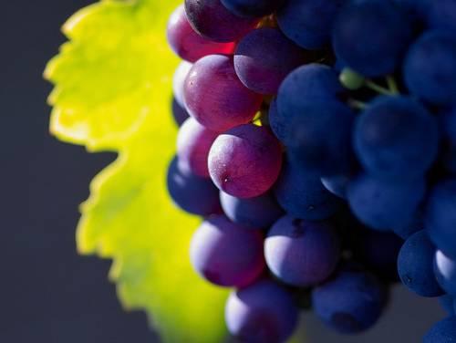 Uva, non solo calorie: depura e contrasta la ritenzione idrica