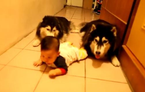 Cani_imitano_neonato_1