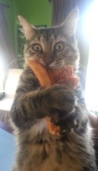 Pizza_stealing_kitten