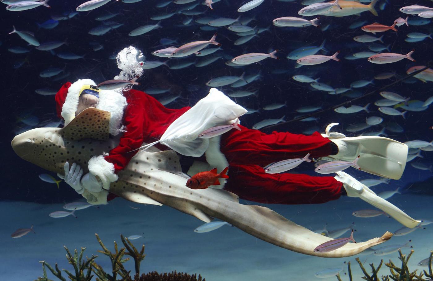 Babbo Natale versione sub all'acquario di Tokyo01