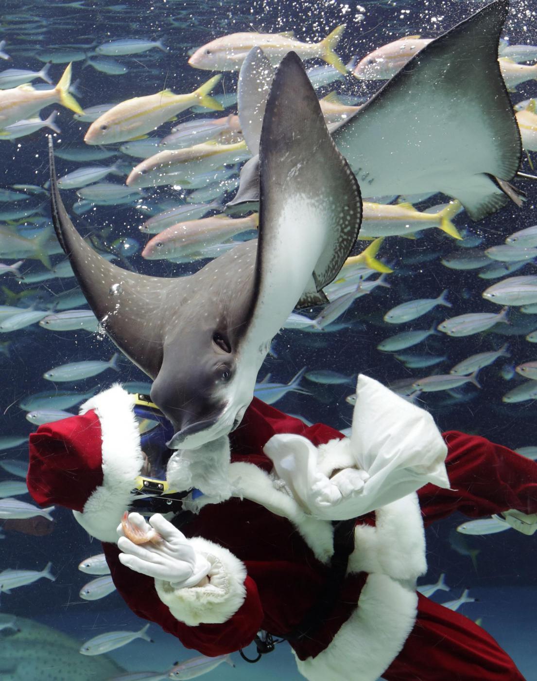 Babbo Natale versione sub all'acquario di Tokyo02