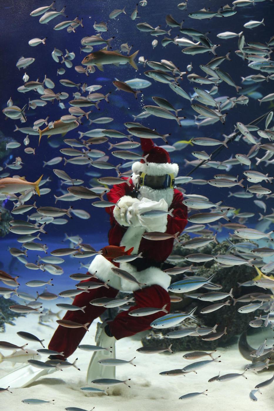 Babbo Natale versione sub all'acquario di Tokyo03