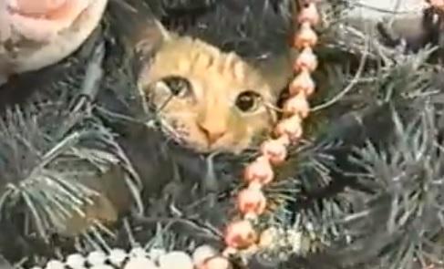 Gatti sull'albero di natale video