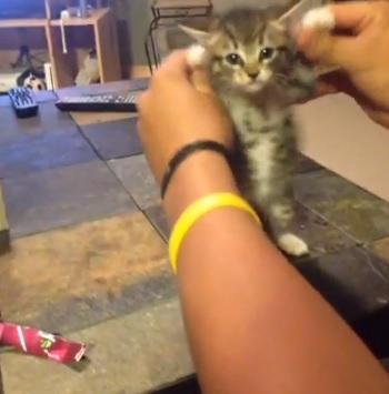 Gatto balla il rap con la canzone Get Silly