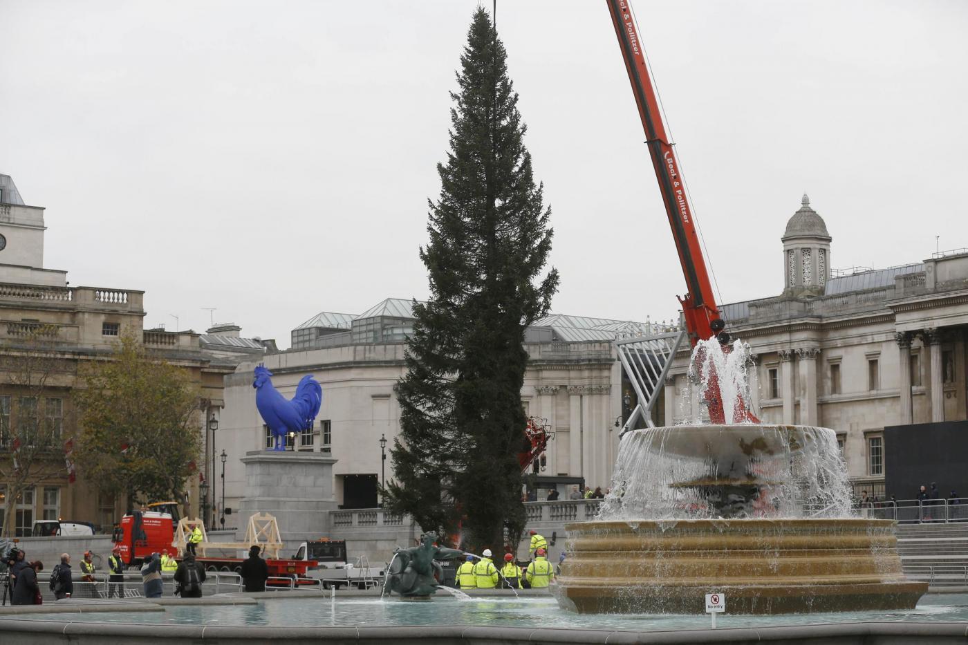 Londra, l'albero di Natale di Trafalgar Square03