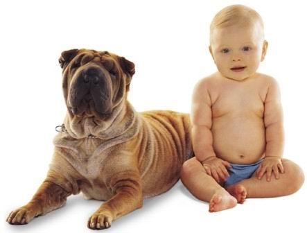 Bambini e allergie, la miglior difesa immunitaria? Un cane in casa