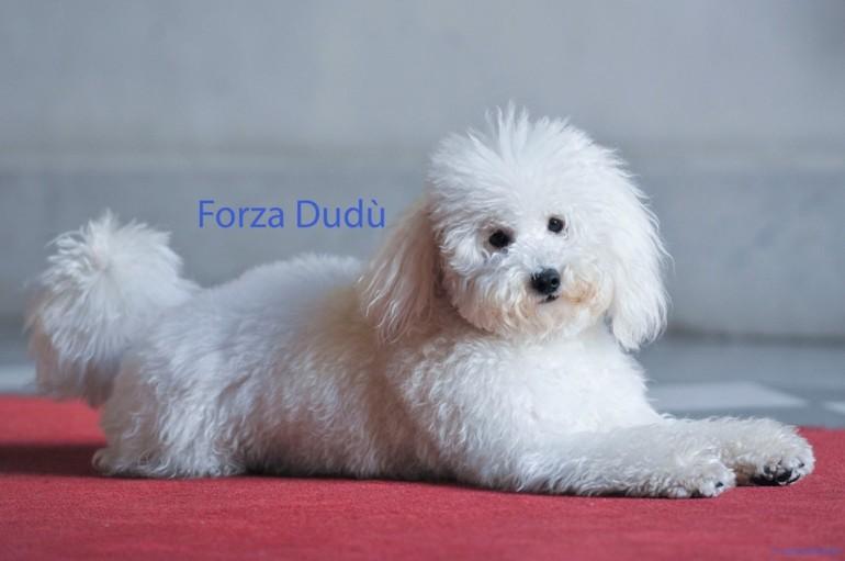 Multata l'allevatrice di Dudù: cuccioli al freddo e al buio