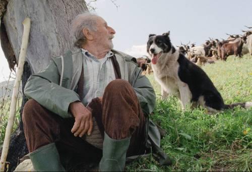 """""""Le quattro volte"""", il film di Michelangelo Frammartino da rivedere"""
