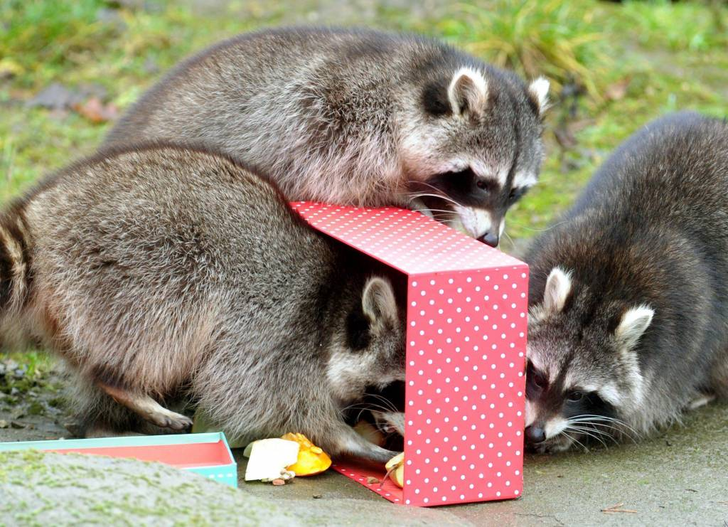 Gifts for zoo animals