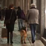 Roberto Cavalli, shopping a via della Spiga con la Lina e Lupo12