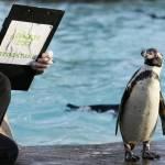 Zoo di Londra, al via il censimento annuale02
