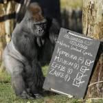 Zoo di Londra, al via il censimento annuale03