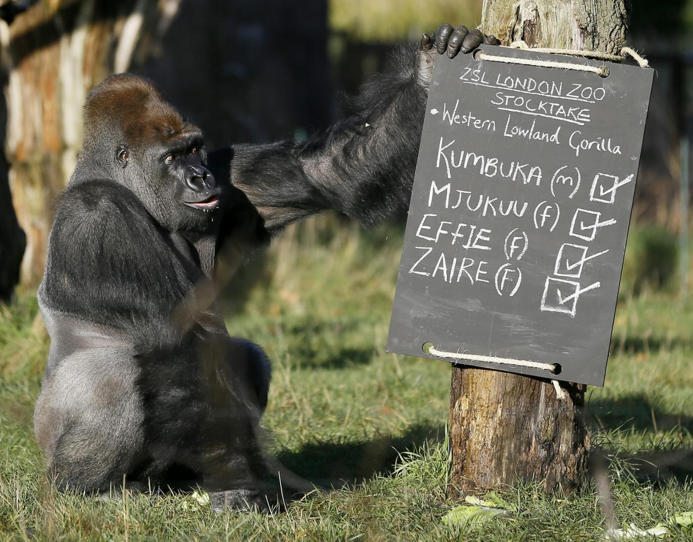 Zoo di Londra, al via il censimento annuale05