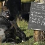 Zoo di Londra, al via il censimento annuale06