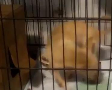 I cani fanno pipì allineanti con il campo magnetico della Terra