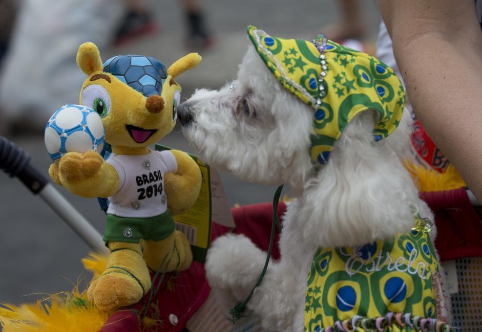 """Blocao"""", il Carnevale dei cani di Rio de Janeiro02"""