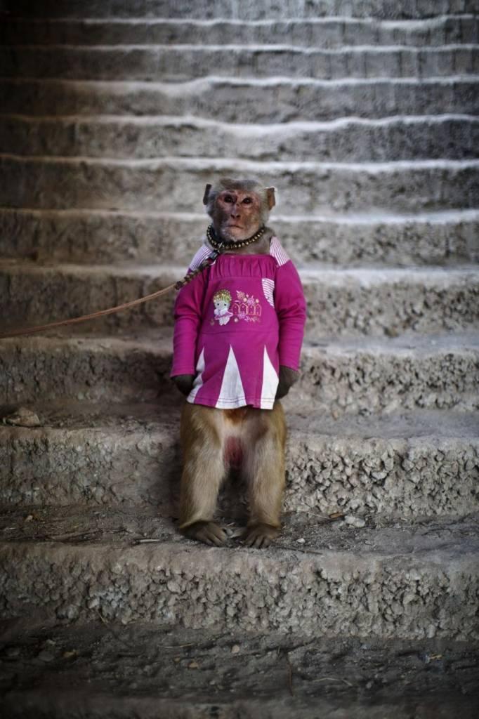 Piccole scimmie americane celebrity