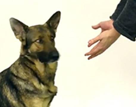 """Come accudire un cane: 3 uscite, 2 ore di gioco al giorno, mai dirgli """"a cuccia"""""""