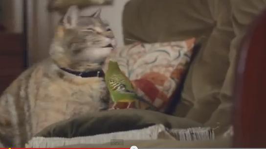 Il gatto e il pappagallino: lo spot diventa virale