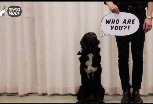 no more woof Nmf aims to be the first device to translate animal thoughts into english thank  you all for your support | check out 'no more woof' on indiegogo.