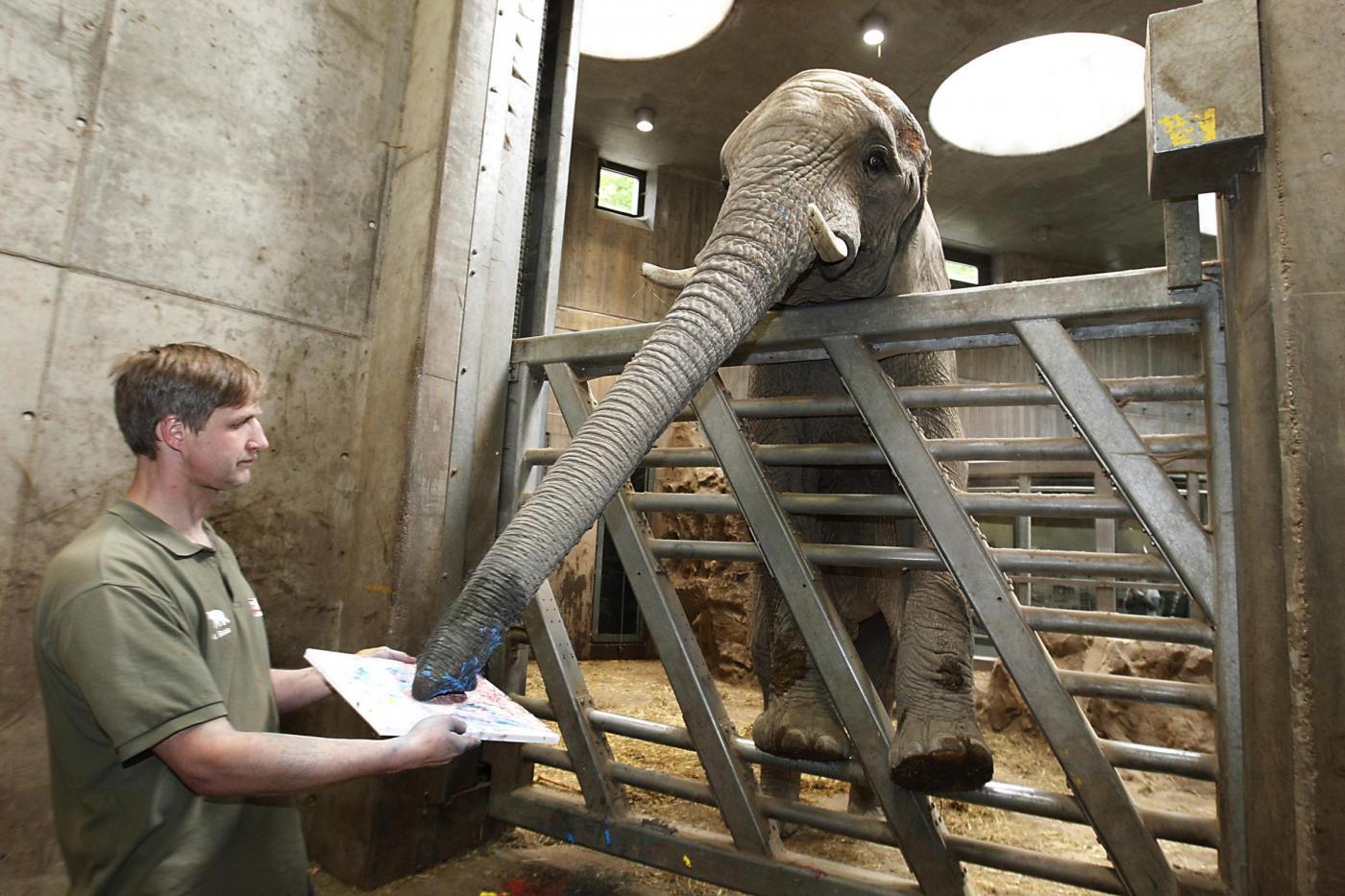Abu, l'elefante dello zoo di Halle che dipinge con la proboscide07
