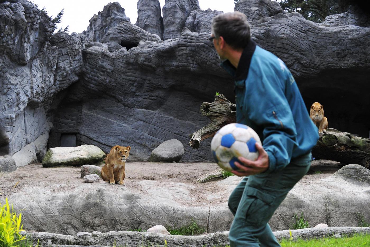 Kevin Richardson, lo zoologo che gioca a calcio con i leoni