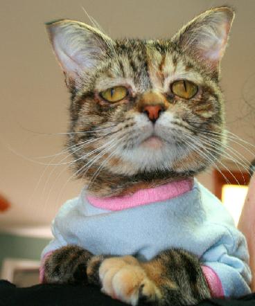 Tucker: il gatto sempre imbronciato per colpa di una rara malattia (video)