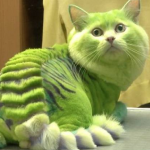 Russia, il salone di bellezza che tinge gatti in draghi verdi e cani in calabroni01