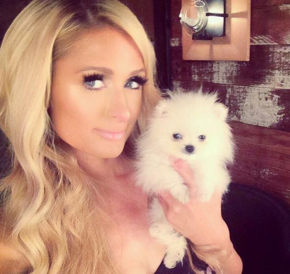 Paris Hilton sborsa 13 mila dollari per avere un cucciolo di Pomerania (FOTO)