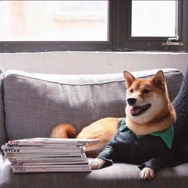 Bodhi, il cane indossare da 10mila dollari al mese FOTO10