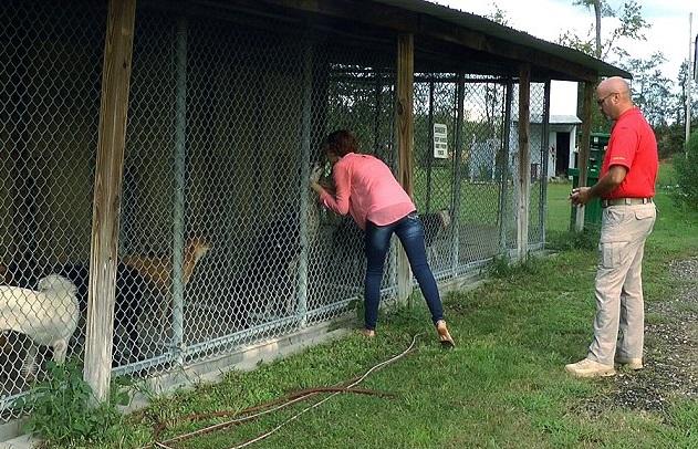 Sopravvive a 2 eutanasie e ad un incidente: ecco Lazarus, il cane miracolato02